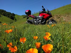 Red Sport Touring motorcycle above a field of poppy flowers